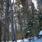 Brek Treescape